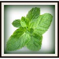 Η τροφή μας το φάρμακό μας: Καλλιεργήστε το... φαρμακείο σας!!!
