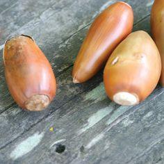 By using acorns,  oa