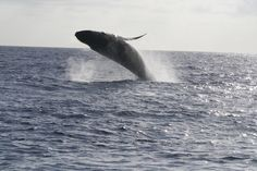 Sight we saw from Cpt Andy's boat in Kauai, Hawaii  Nothing like seeing these awesome animals up close and personal...
