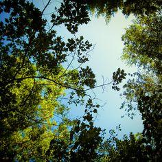 abstract foliage   Flickr - Photo Sharing!