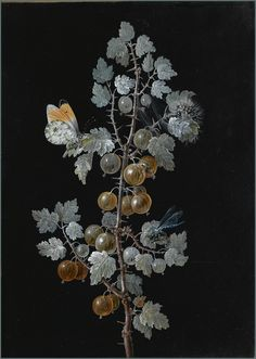 https://flic.kr/p/adXQxs | Barbara Regina Dietzsch - 'A Gooseberry Branch with Dragonfly, Butterfly and Caterpillar' 18th Century. Pen, Gouache & Pencil | Barbara Regina Dietzch [German painter, water-colorist and illustrator from the Nuremberg artist dynasty 1706-1783].   Dietzch developed a technique of watercolor over gold leaf on vellum that had never been attempted before. She had a considerable influence over many still life natural history artists of the period and her watercolors…