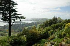 View from Larnach Castle's garden, New Zealand