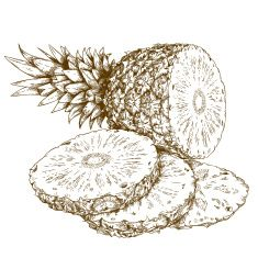 engraving illustration of pineapple and slices vector art illustration