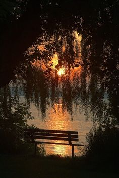 Drippy, willow-framed sunset by the lake.