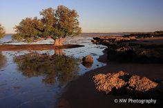 Mangrove trees - Port Hedland, Western Australia