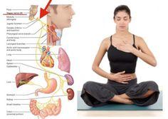 Vagus Nerve Damage, Nerve Pain, Cranial Nerves Mnemonic, How To Relieve Migraines, Nursing School Tips, Ob Nursing, Nursing Schools, Autonomic Nervous System, Brain Health