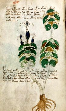 Medieval Histories brings you the news about current exhibitions, new books and new research about the Middle Ages Voynich Manuscript, Medieval Manuscript, Codex Seraphinianus, Antique Art, Middle Ages, New Books, The Book, Vintage World Maps, Place Card Holders