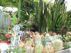 Plantas e Jardins, Plantes et jardins, Pflanzen und Gärten, Plantas y Jardines, Plants and Gardens, Piante e Giardini