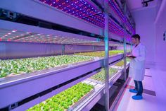Philips LED farm could change the farming industry | Digital Trends