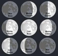 Gardening by the Moon - this looks really interesting, would love to freak my neighbours out by planting at night!