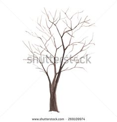 Watercolor tree. Tree without leaves silhouette isolated on white background. vector illustration - stock vector