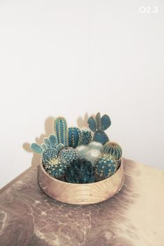 Cacti collection.