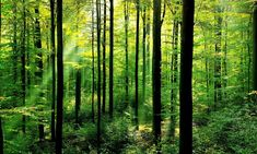 forests-why-matter_63516847.jpg?13455340
