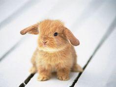 La Bella Fleur : Inspiratie | Lovely ragdoll kittens and little bunny's!