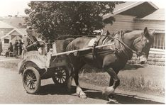 """Ken Kelsey """"Milkman"""" in Howick Centennial Parade; 9139 - Howick Historical Village on NZMuseums Cannon, Museums, Horses, Animals, Animales, Animaux, Horse, Animal Memes, Animal"""