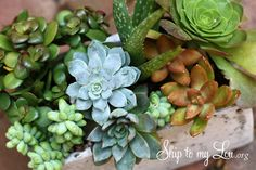 How to grow succulents- easy growing tips #garden #howto skiptomylou.org