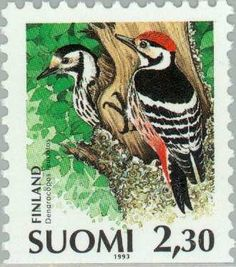 White-backed Woodpecker (Dendrocopos leucotos) Postage Stamps, Coloring Books, Rooster, Birds, World, Gallery, Woodpeckers, Animals, Image