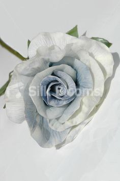 Large Single Fresh Touch Pale Pink Open Rose, Artificial Rose Large Single Fresh Touch Pale Pink Open Rose, Artificial Rose [DE0008 Pale Pink] - £12.99 : Silk Wedding Flowers, by Silk Blooms, Glasgow