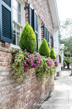 These Charleston window boxes use beautiful shade and sun plants to add great curb appeal to the front yard garden. Get inspiration from their window box ideas to design gorgeous flower box plant combinations for your own home. Window Box Plants, Window Box Flowers, Window Boxes, Flower Boxes, Shade Flowers, Flower Ideas, Blue Plants, Large Plants, Potted Plants