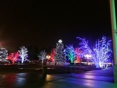 Winter lights around Brampton City Hall BEFORE the ice storm...very pretty!