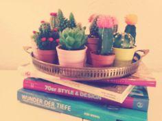 My Cactus Family...