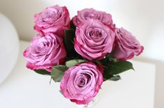 Black orchid roses
