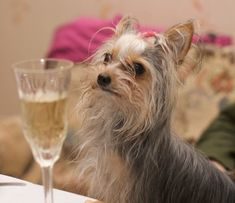 Pets Cute and Docile Canidae Dog Food, Four Year Anniversary, Julia Williams, Nice Comments, Bow Wow, Make New Friends, Dark Horse, Dog Photos, Pets