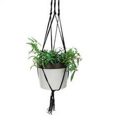 COYNES - Dark Band Hanging Pot, Large - Ivory
