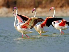 eniaftos: Dance, Flamingo, Dance!