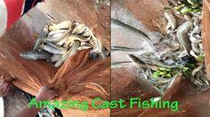 WOW!!Amazing Cast net fishing at Bangladesh