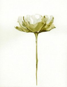 FLOWERS  Tulip / Papoila  Drawings with Ink by SimpleArtStudio, €40.00