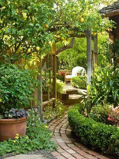 Brick walkway under arbor, fruit tree, short hedge lines walkway, focus point beyond arbor