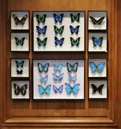 ENTOMOLOGIE - [Deyrolle - Taxidermie, entomologie, curiosités naturelles]