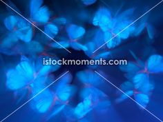 60 Best Video Background Loops images in 2012 | Free stock