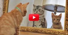 Cat Explains His Reflection In This Hilarious 'Dear Kitten' Video | The Animal Rescue Site Blog