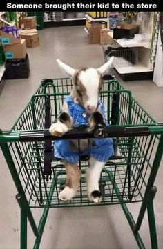 Kid goes to grocery store with Mom.