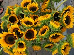 Heading to your local Farmer's Market this weekend? Grab some beautiful flowers to add colour and fragrance to your home. Sunflower Garden, Sunflower Flower, Sunflower Fields, Flower Farm, Happy Flowers, Beautiful Flowers, Sun Flowers, Wedding Flowers, Sunflowers And Daisies