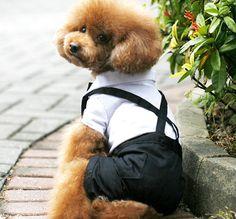 Baby spring suspenders blazer teddy dog clothes pet wedding dress(China (Mainland))