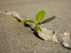 Nature through concrete - Google Search