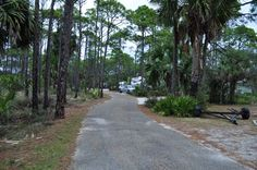 Camp sites among the palm trees and tall pine trees at St. Joseph State Park, Cape San Blas, Florida.   Go to www.YourTravelVideos.com or just click on photo for home videos and much more on sites like this.