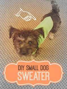 DIY small dog sweate