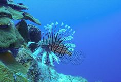 diving in turks and caicos - myseastory