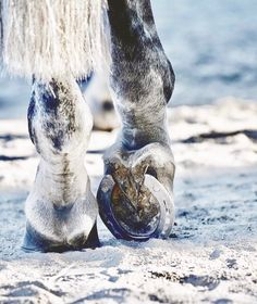Horse hooves in the sand. Stunning horse photography at the beach.