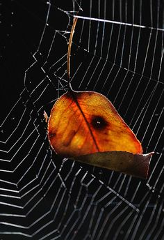 Autumn, Caught In The Web by AnyMotion, via Flickr