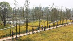 A network of elevated pathways in China& Hunan Province is named World Landscape of the Year 2017 at the World Architecture Festival awards. World Architecture Festival, Space Architecture, Amazing Architecture, Landscape And Urbanism, Park Landscape, Landscape Design, Bangkok, Santiago Calatrava, Norman Foster