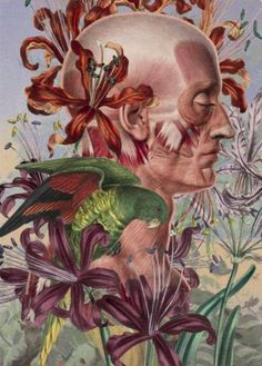 - Awesome Anatomical Collages by Juan Gatti Art And Illustration, Collages, Art Du Collage, Medical Art, Anatomy Art, Human Anatomy, Inspiration Art, Gcse Art, Science And Nature