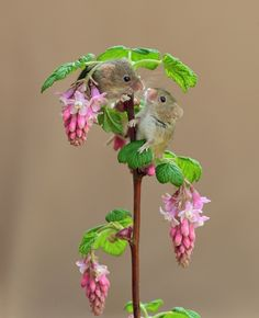 Dean Mason is a wildlife photographer who specializes in harvest mouse photography. These tiny and adorable mice have incredibly acrobatic climbing skills. Animals And Pets, Baby Animals, Funny Animals, Cute Animals, Felt Animals, Wildlife Photography, Animal Photography, Funny Animal Pictures, Cute Pictures