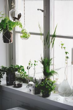 Plants all over