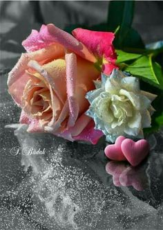 Roses, my favorite ones!, <v>