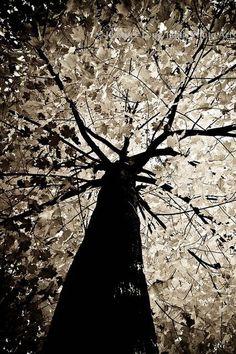 Tree in the moonlight